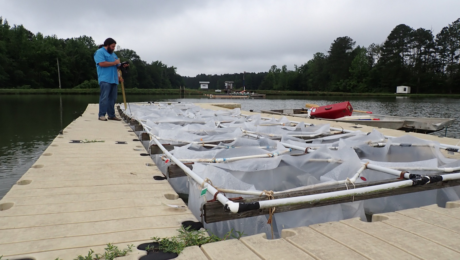 Alan Wilson conducts research on algal blooms at a lake in the Auburn area.