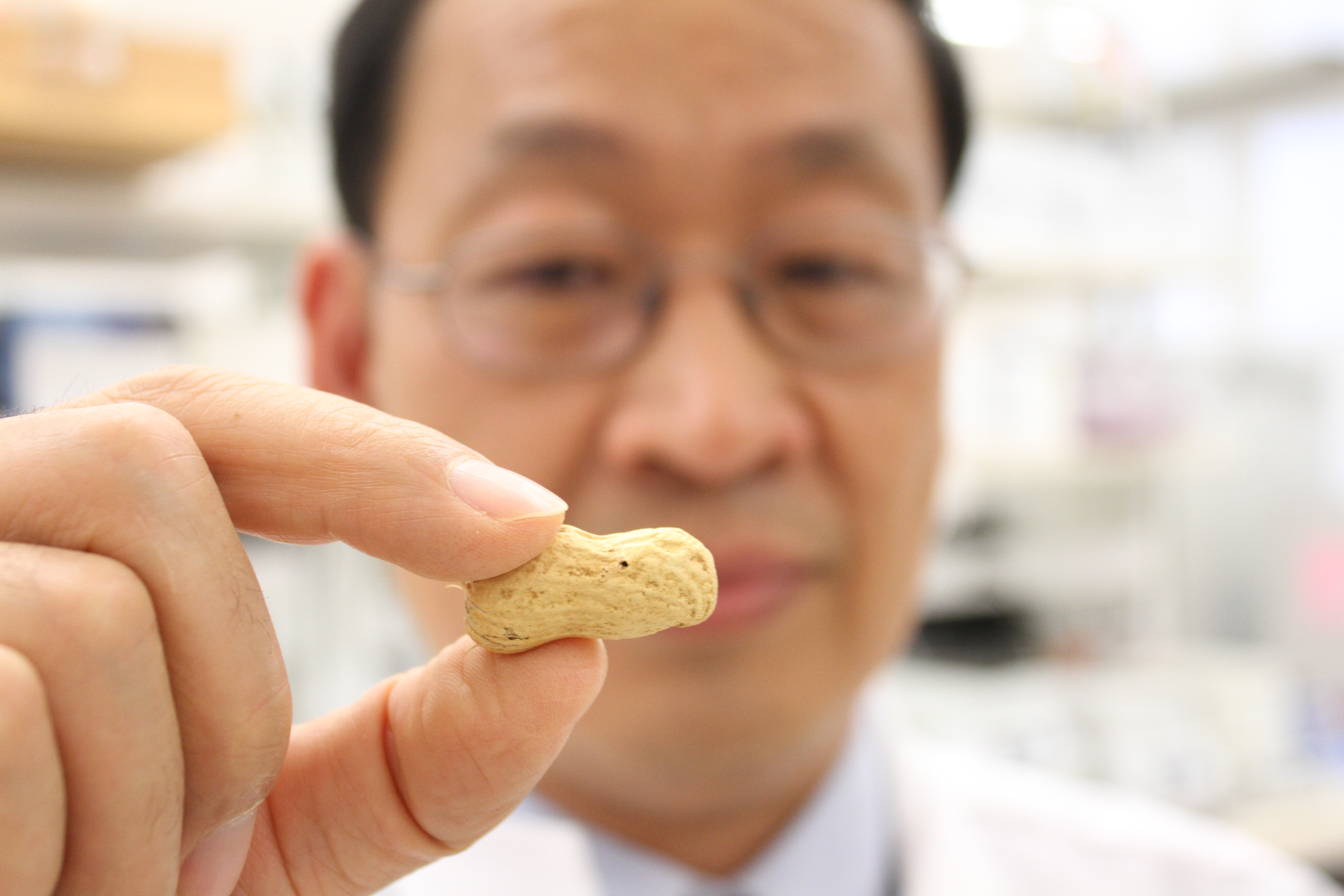 Dr. Charles Chen, professor of peanut breeding and genetics, displays the new peanut variety AU-NPL 17.