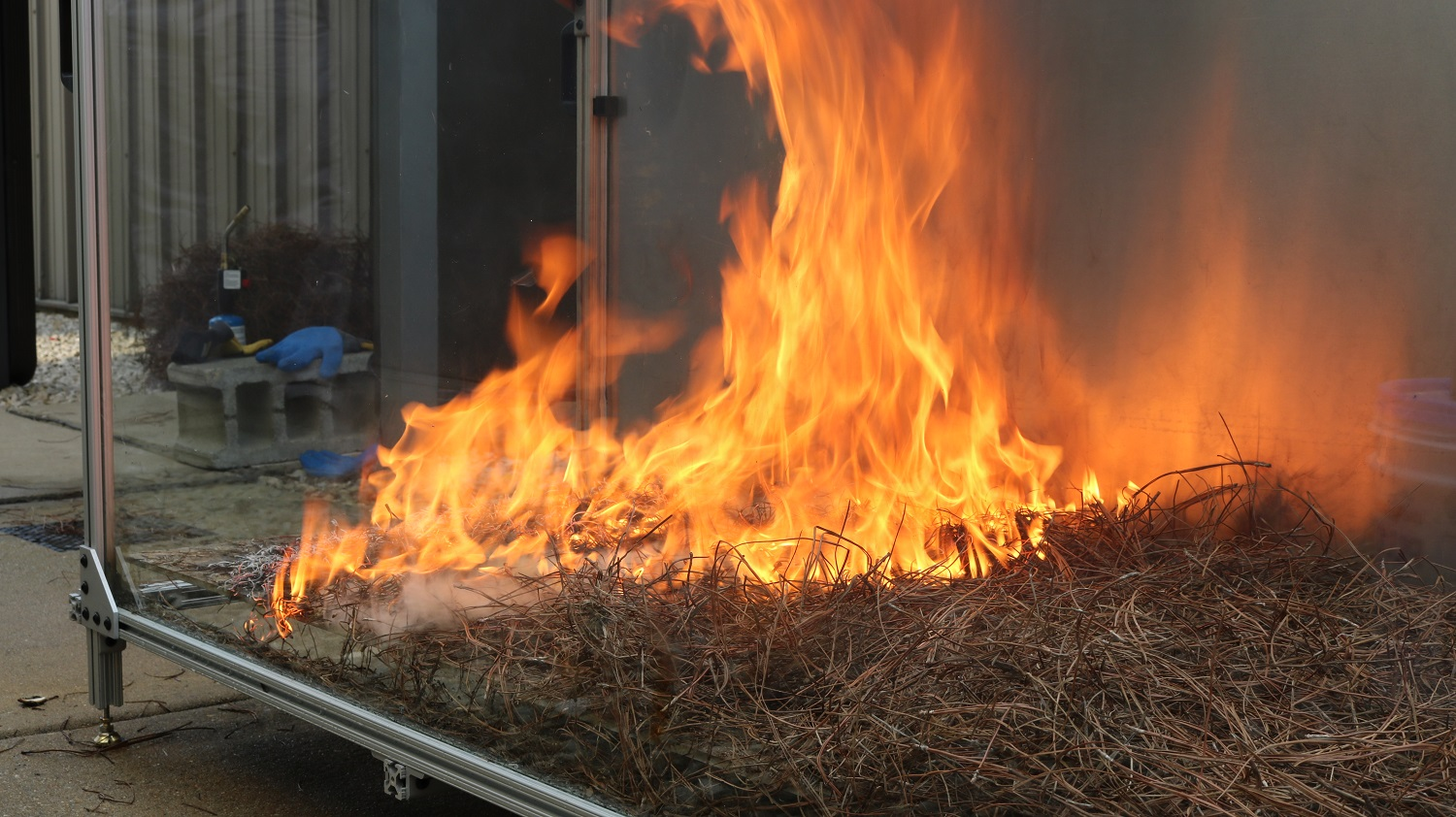flames and pine needles in wildfire research apparatus