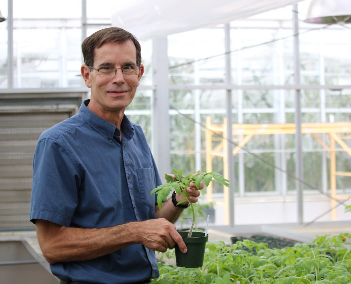 Dr. Joseph Kleopper, professor of plant pathology, holds a plant in a greenhouse.