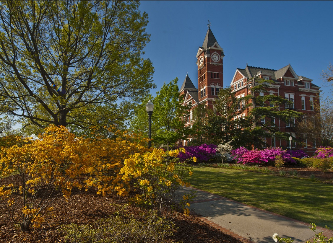 Auburn University's Samford Hall surrounded by trees and azaleas in spring