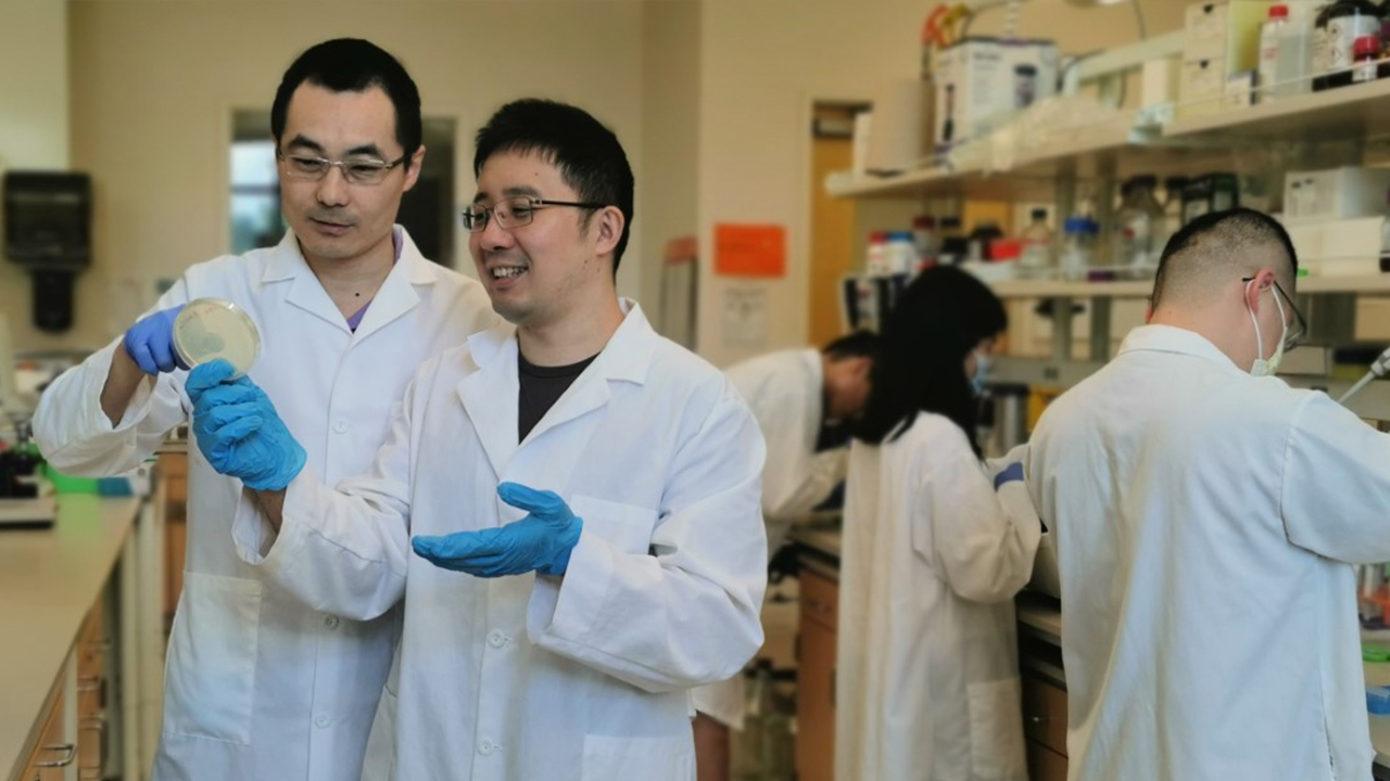 Yi Wang (left), associate professor in the Department of Biosystems Engineering, works with post-doc Yuechao Ma in the lab.