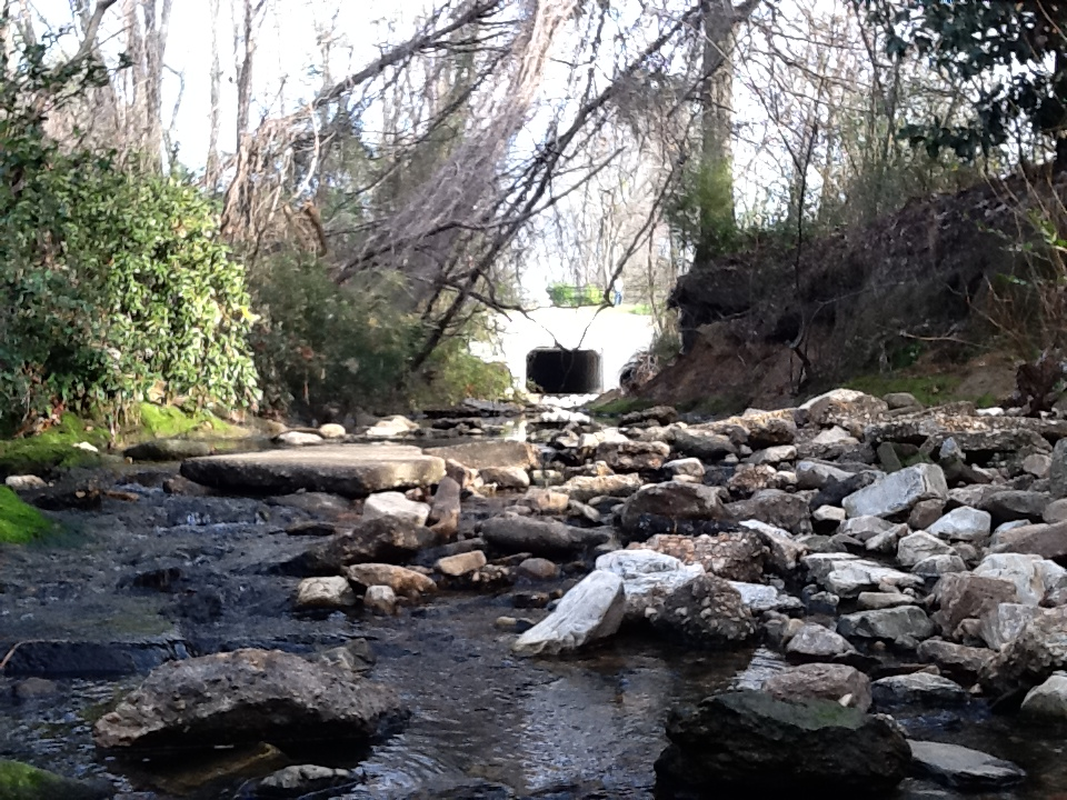 Parks Mill Creek